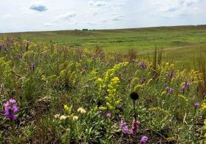 prairie in bloom