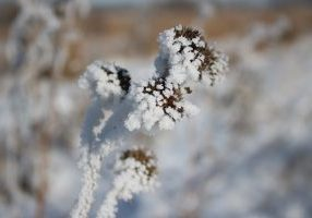 Photo of hoarfrost