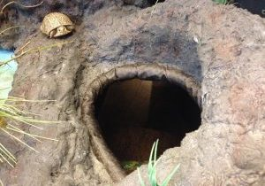 Photo of a turtle by a fox burrow hole