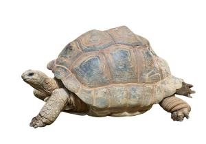 Photo of a tortoise